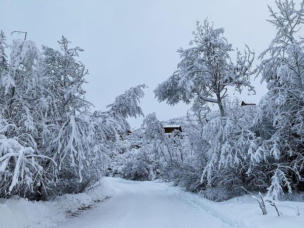 in deep. early morning. 15-20 inches of snow in 48hrs. ❄️🏔 Utah Iphonexs Park City, Utah Wasatch County Wasatch Back Snow Winter Cold Temperature Tree Plant Pine Tree Pinaceae