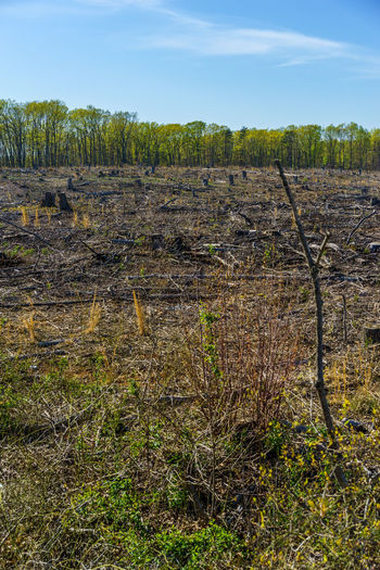 Climate Change Day Deforestation Field Forest Fracking Global Warming Global Warming Effect Grass Growth Landscape Mankind Nature No People Non-urban Scene Outdoors Plant Scenics Sky Telling Stories Differently Virginia Wood Environment Sustainability