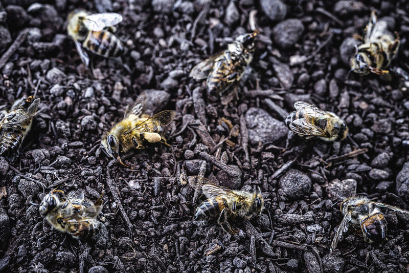 High angle view of bee on ground