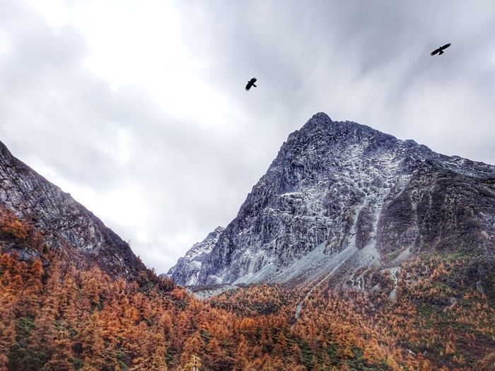 Low angle view of bird flying against mountain range
