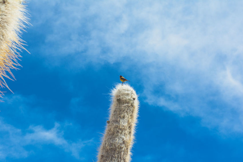 Isla Incahuasi - The Bolivian Salt Flats Animal Themes Animals In The Wild Beauty In Nature Bird Blue Cacti Cactus Cloud Cloud - Sky Day Flying High Section Isla Incahuasi Low Angle View Nature No People One Animal Outdoors Perching Scenics Sky Tall Tranquility Wildlife Zoology