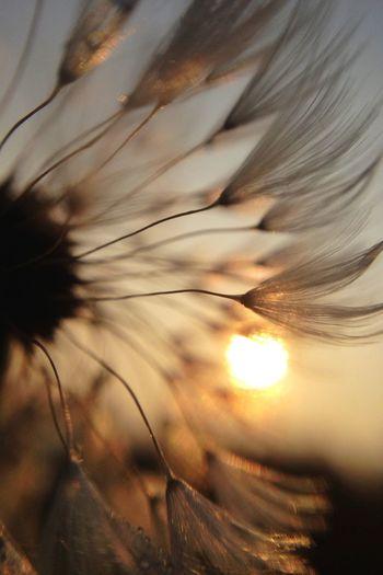 Wishful thinking Light Up Your Life Macro Eye4photography  EyeEm Best Shots