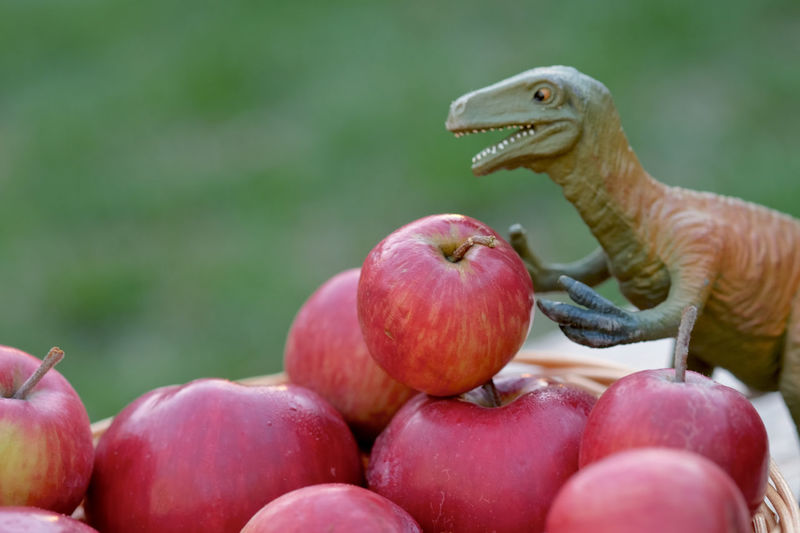 Close-Up Of Dinosaur Toy On Apples