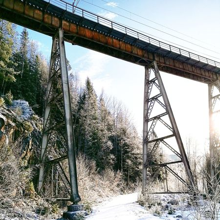 Sky Tree Outdoors Low Angle View Nature No People Water Day Close-up Norway🇳🇴 Gjerstad Frozen Winter Bridge - Man Made Structure Sunlight Architecture Viadukt