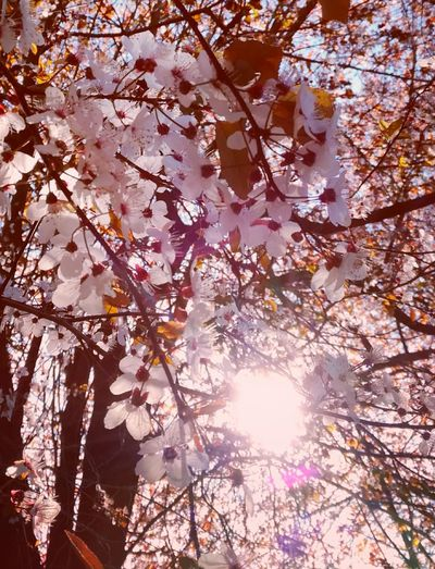 Tree Nature Low Angle View Branch Beauty In Nature Sunlight Growth No People Tranquility Sun Day Backgrounds Poetic Poesie Pink Flower 🌸 Millennial Pink Pink