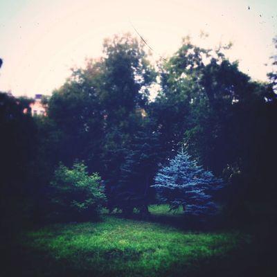 Omsk Nature Природа осень