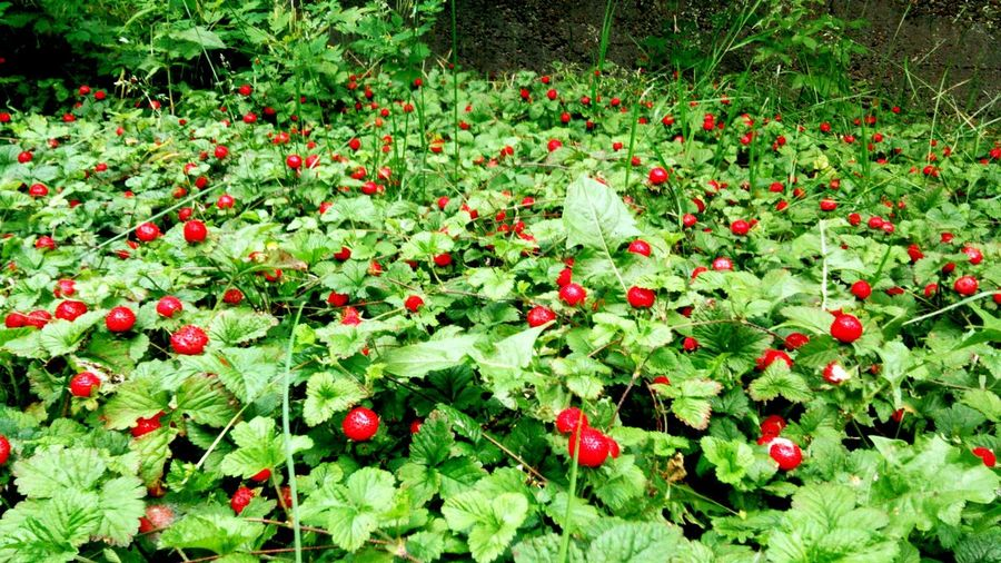 Flowers,Plants & Garden Fruits