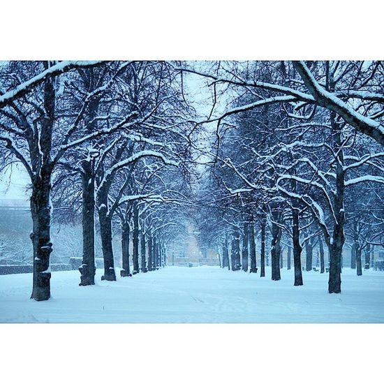 Beautiful Atmosphere and Nature . The Hofgarten garden covered in snow. near odeonsplatz. snowing, white winter. munich münchen bayarn Deutschland Germany. Taken by my SonyAlpha dslr A57. ثلج شتاء حديقة ساحة بافاريا ميونخ المانيا
