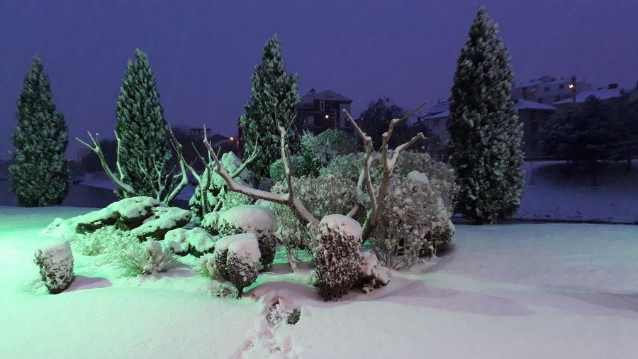 Tree Snow Sky