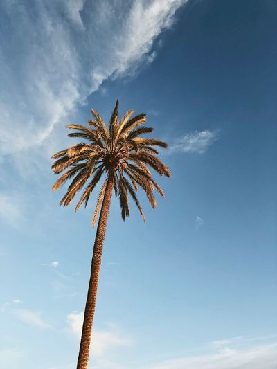 Palma de Mallorca, Spain Beauty In Nature Blue Sky Cloud - Sky Day Evening Sun Low Angle View Nature No People Outdoors Palm Leaf Palm Tree Paradise Plant Scenics - Nature Sky Tree Tropical Climate