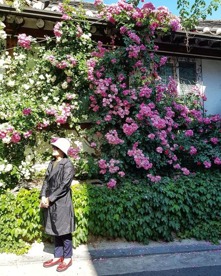 Blooms Spring Blooms House Looking For Sungkyunkwan University Tripwithson2017 Tripwithsonmay2017 Seoul South Korea