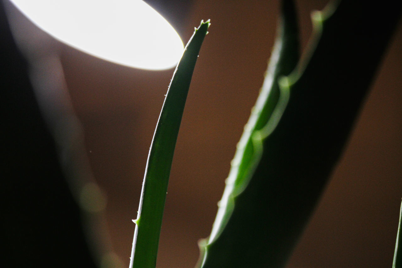 close-up, growth, plant, no people, nature, selective focus, beauty in nature, focus on foreground, green color, plant part, leaf, sunlight, day, indoors, fragility, freshness, vulnerability, plant stem, shadow