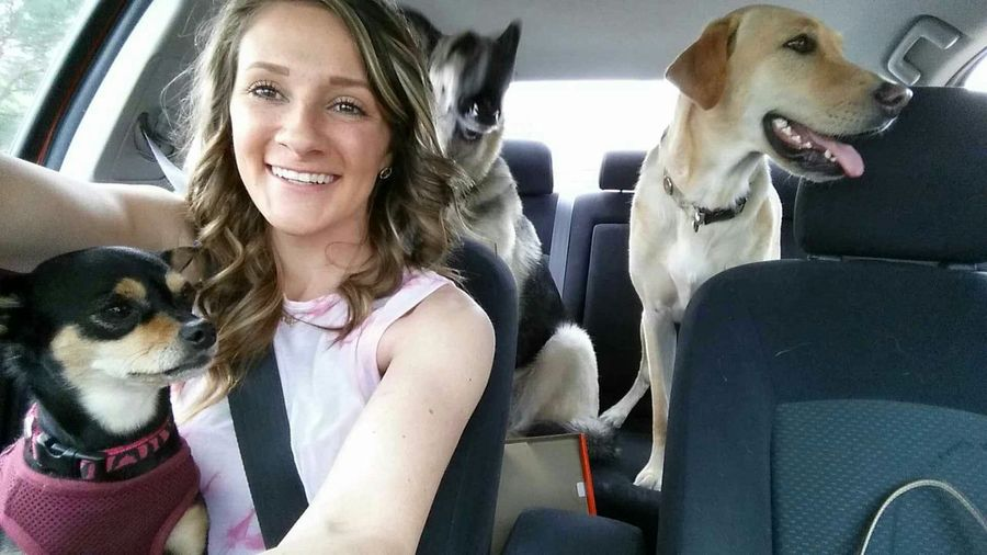 This is my life. Car Selfie German Shepard Yellow Lab Chippin
