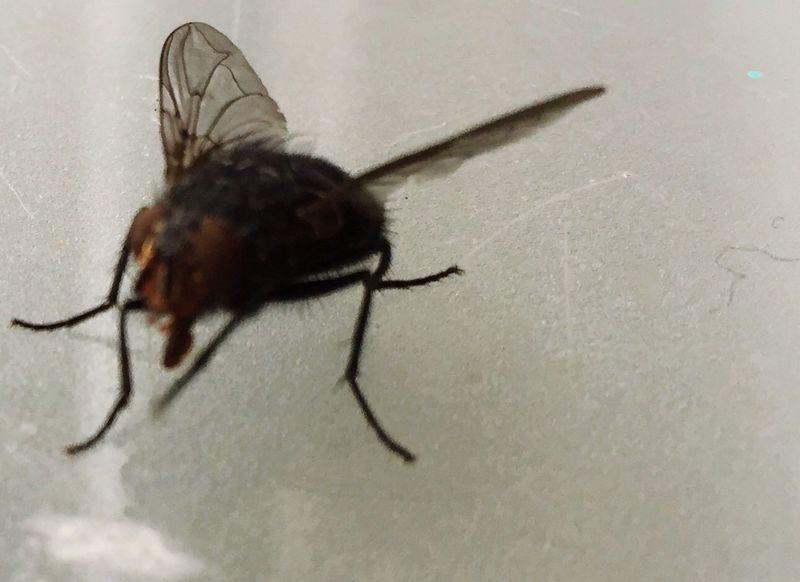 Fly, fliege