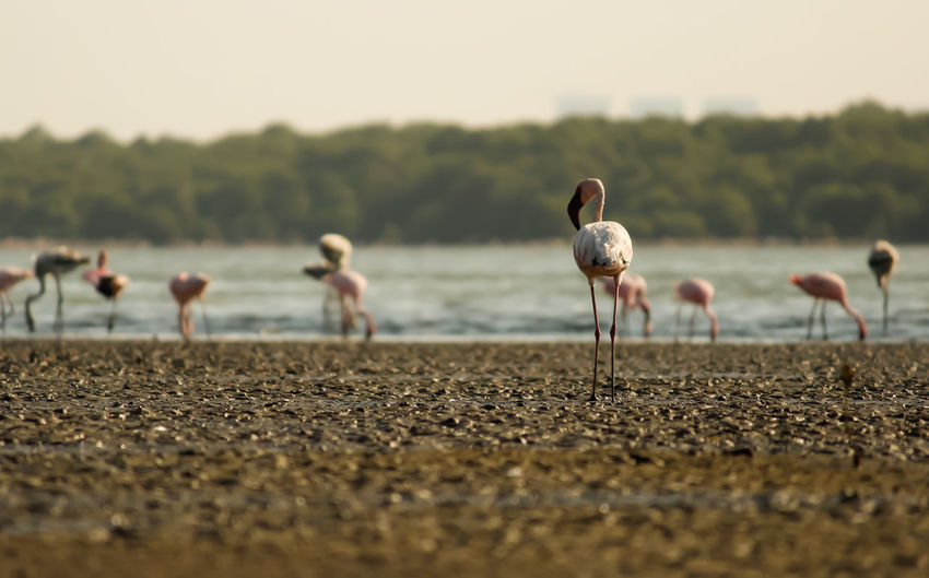 Flamingos Bird Animal Themes Nature MumbaiDiaries Migratory Birds Creek Photography Animals In The Wild Flamingos
