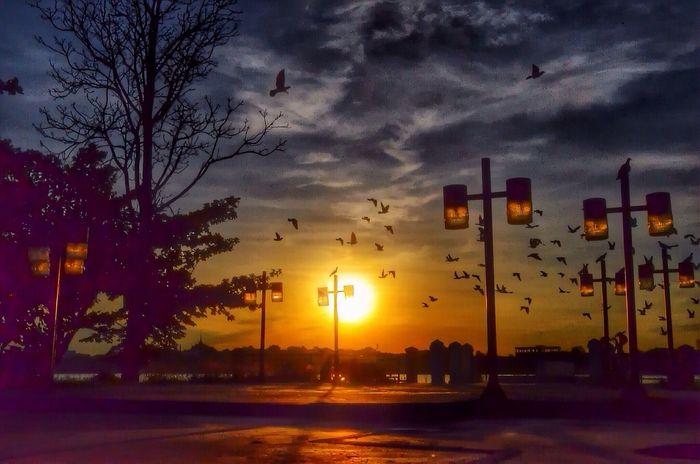 courage .. EyeEm Best Shots - Landscape Enjoying Life Sky_collection Sunset #sun #clouds #skylovers #sky #nature #beautifulinnature #naturalbeauty #photography #landscape