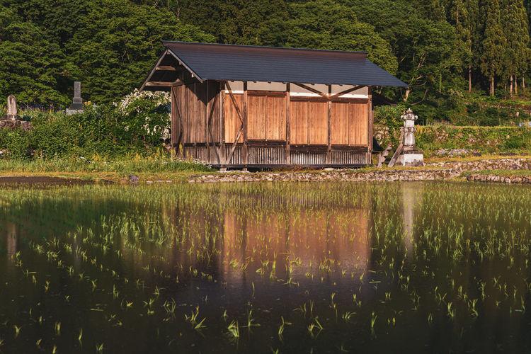 Rice fields ready for the summer season in shirakawago, japan