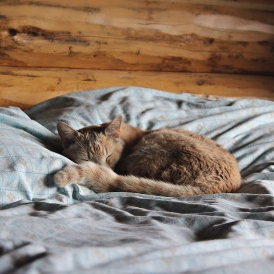 Sleeping Cat Bedsheets Cozy Canon Rebel First Eyeem Photo