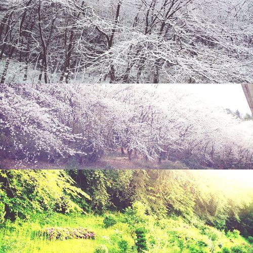 가을빼고 봄,여름,겨울.. 같은장소