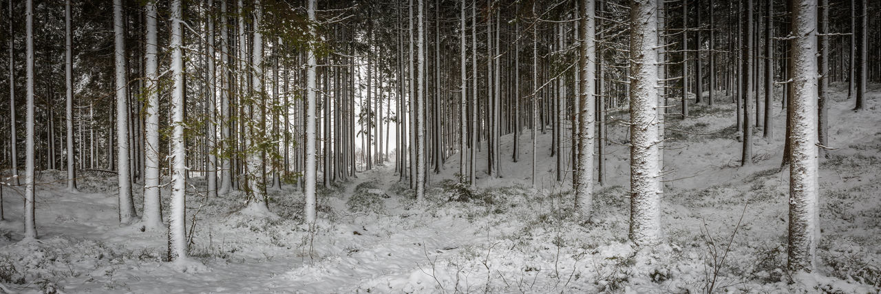 A nice and cold day with a little snow… PW Patrik Wennerlund Woodstock Beauty In Nature Cold Temperature Day Forest Growth Nature No People Outdoors Scenics Snow Tree Winter Woods