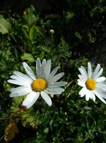 Uttarakhand What I Value India Valley Of Flowers God Of Small Things Edge Of The World Flowers Eyem Gallery Nature Tadaa Community