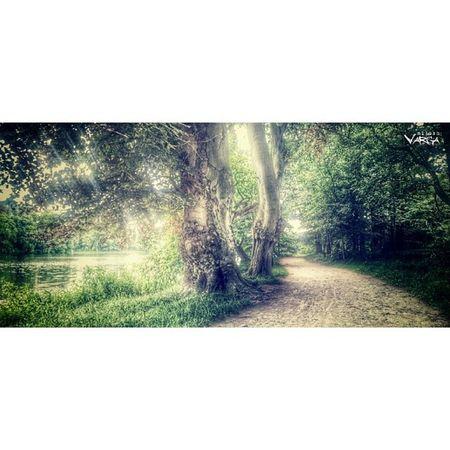 Royalsnappingartists Rsa_light Rsa_nature Rsa_trees