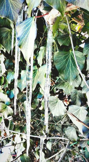 Nature Plant Growth No People Leaf Backgrounds Outdoors Day Beauty In Nature Fragility Freshness Water Close-up Mobilephotography Ice Crystals Scenics Cold Winter ❄⛄