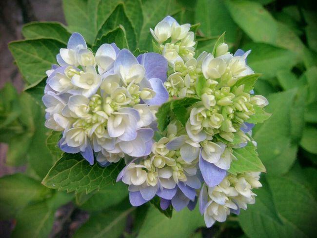 Flower AsusTransformerPrime
