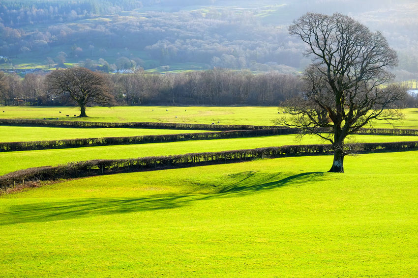 Cumbria England UK Patterns In Nature Bare Tree Beauty In Nature Coniston Day Farming Life Field Fields Golf Golf Course Graphic Shapes Grass Green Color Landscape Nature No People Outdoors Scenics Shapes And Forms Shapes In Nature  Sky Tranquil Scene Tranquility Tree