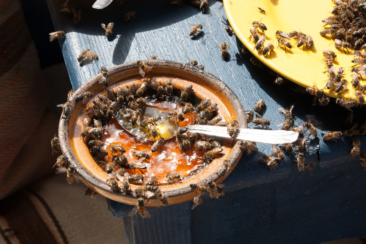 Abundance, Animal, Animal Themes, Bee, Bowl