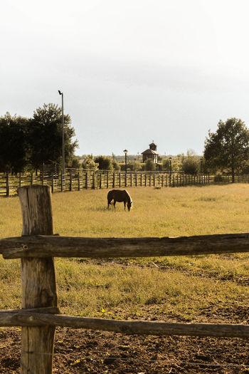 Horse in