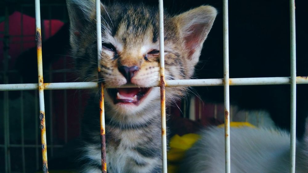 Animal Love Close-up Cage Feeling Naughty Cat