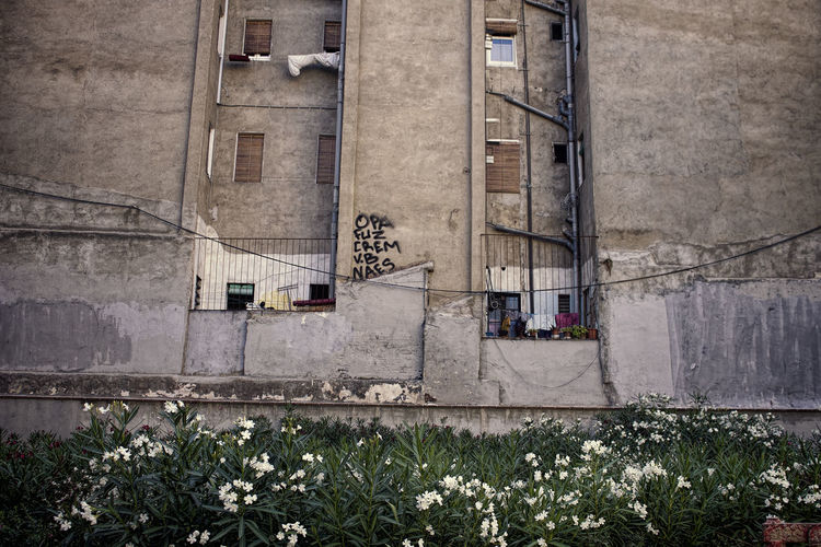 Low angle view of white flowering plants against old building