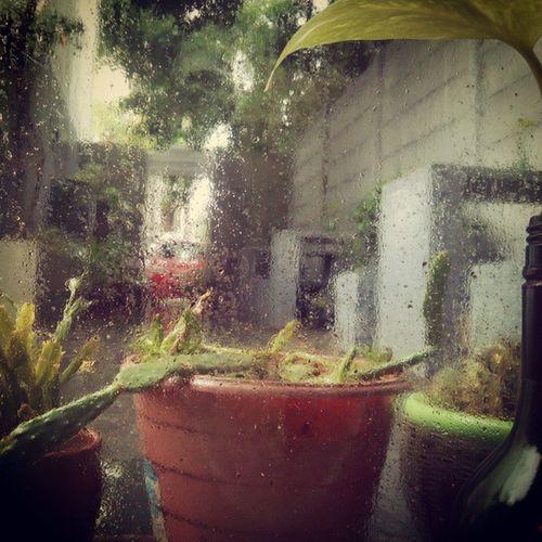 Lunch at AshvithaBistro in the Rain