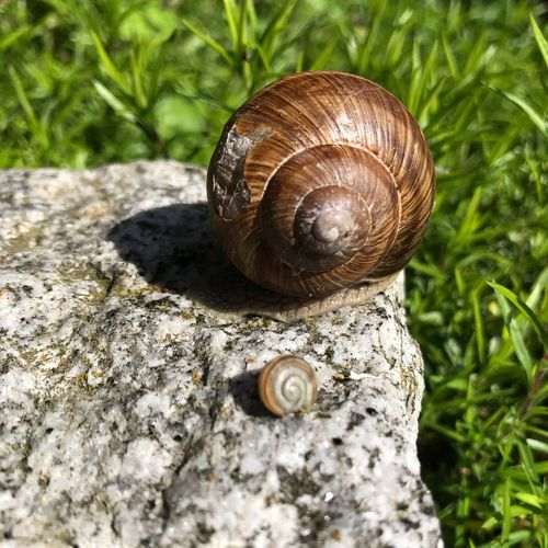 """Follow me"" Shell Animal Wildlife Mollusk Invertebrate Animals In The Wild Animal Shell Snail Animal Close-up Outdoors Spiral Nature Boredom Gastropod Animal Themes No People Sunlight The Still Life Photographer - 2018 EyeEm Awards"