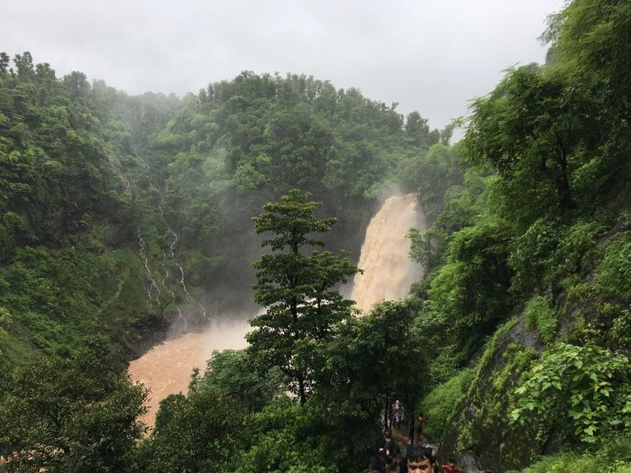 Dabhosa Waterfall during monsoon Monsoon Tree Waterfall Water Nature Beauty In Nature Scenics Growth Mountain Day Outdoors No People Forest Landscape Spraying Motion Sky