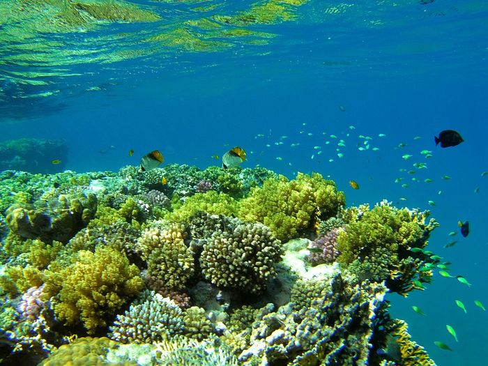 Coral And Fish Undersea