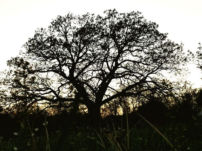 Live For The Story Tree Outdoors Silhouette Beauty In Nature Low Angle View Growth Nature Tranquility