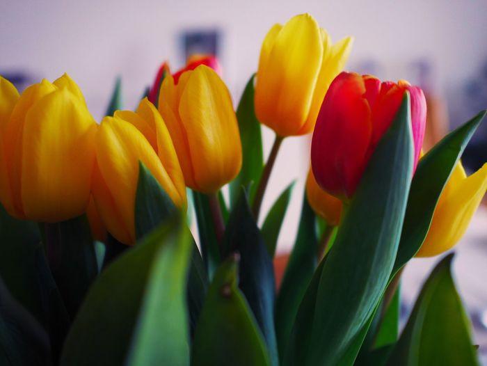 Tulips Yellow Flowers Yellow Flower Yellow And Red Red Red Tulips Yellow Tulips Yellow Tulip Bouquet Of Flowers Bouquet Decoration Decorative Decorating Nature_collection Nature Photography Flora Floral Perfection Botany Botanical Botanic Tulpaner Tulpan Tulpanvas Tulpanbukett Var