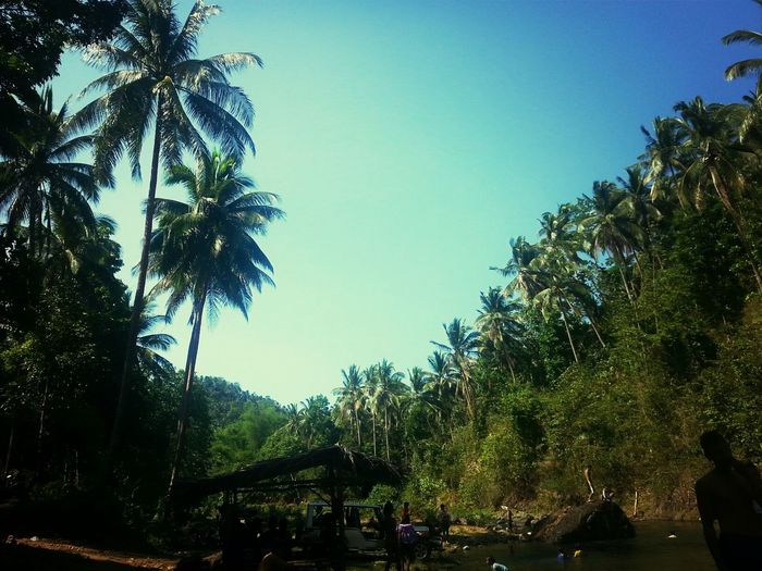 Great Views Great Day (:  Landscape_Collection Coconut Trees