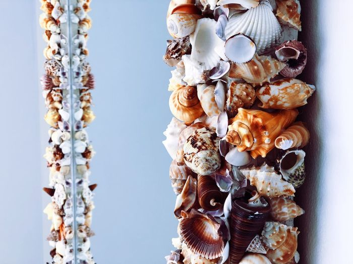 Snails Beach No People Day Close-up Nature Shell Hanging Outdoors Beauty In Nature Animal Shell Animal Wildlife Abundance Plant Winter Large Group Of Objects Cold Temperature Sky Wall - Building Feature Freshness Pattern Focus On Foreground