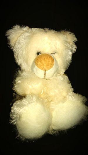 Teddy Fun TeddyPhotography 😄