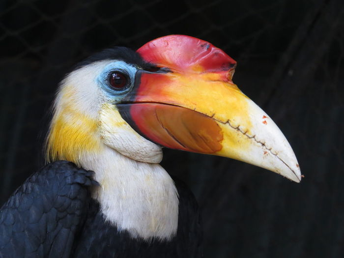 Low angle view of hornbill at zoo