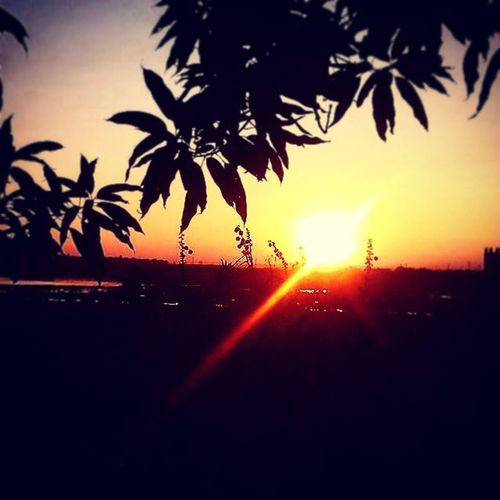 AZ Shaikhayaz515 @gmail.com SUPPORT Sunset