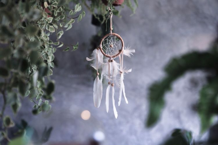 EyeEm Selects Plant Close-up Focus On Foreground No People Hanging Dreamcatcher Day Tree Nature Feather  Fragility Selective Focus Beauty In Nature Outdoors White Color Decoration Growth Vulnerability  Branch Cold Temperature