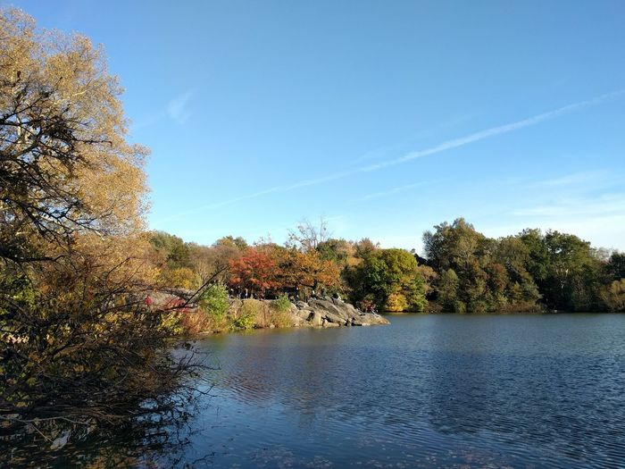 Central Park New York Tree Water Outdoors No People Sky Travel Destinations