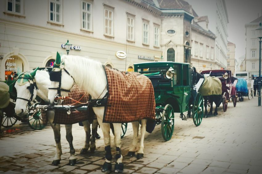 Vienna Chariots Horses Beautifully Organized Mobility In Mega Cities