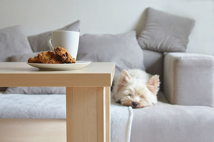 home sweet home Breakfast Nordic Interior Pillow Relaxing Cafe Table Comfort Comfortable Cup Tea Design Domestic Domestic Animals Food Furniture Grey Home Comforts  Interior Lifestyles Living Room Resting Rug Scandinavian Style Sleeping Sofa White Terrier Wood - Material