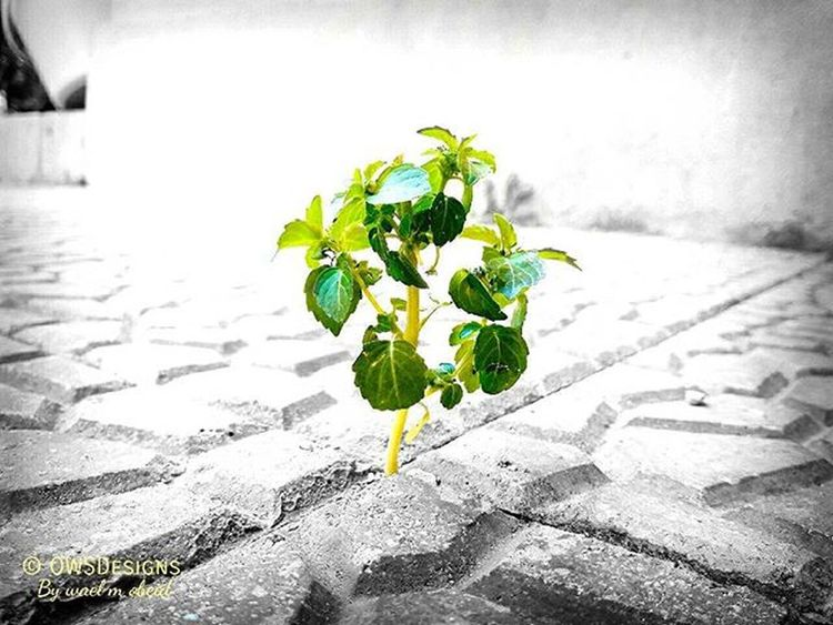 Moment Green Peace Hope Life Photographie  Photo Camera Mobile Phone Samsung Galaxy J7 Galaxy_J7