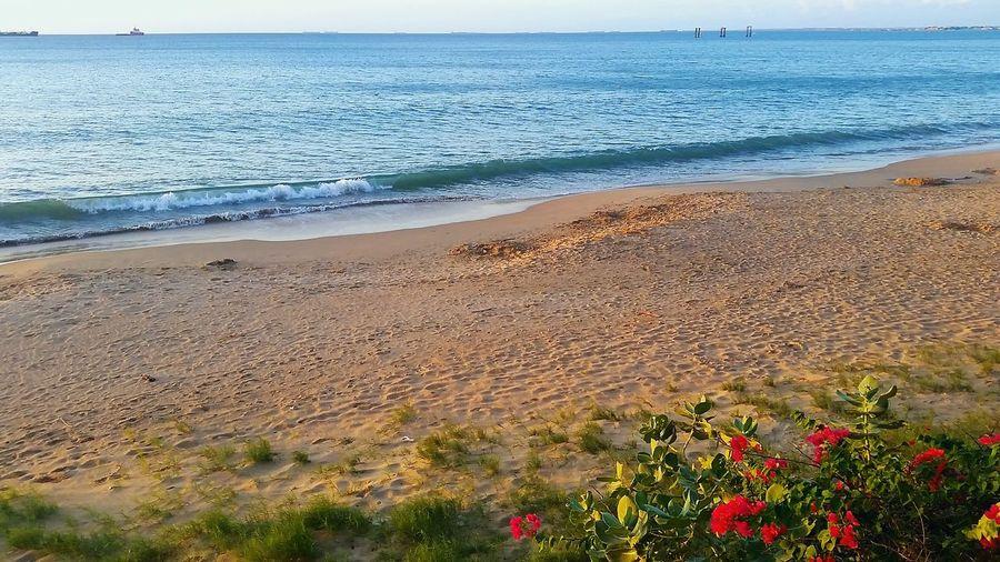 encontrando paz sin buscarla... The Traveler - 2018 EyeEm Awards Flower Water Sea Wave Beach Sand Summer Red Sky Horizon Over Water